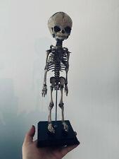 Cabinet de curiosités oddities squelette foetus en résine sur socle en bois