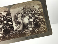 1904 Underwood Young Girl w/ Cat Kitty Kitten Stereoscope Stereocard stereoscope