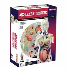 4D PREGNANCY TORSO Human Body Pregnant Anatomy 3D Model Organs science Medical