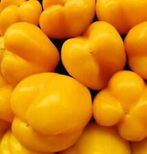 Golden Calwonder Pepper Seeds- 75+ 2020 Seeds- Fresh!