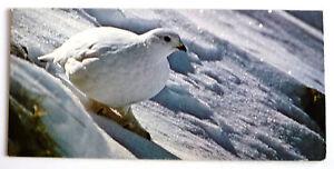 merveilles du monde nestle 62 les animaux de montagne le lagopede alpin