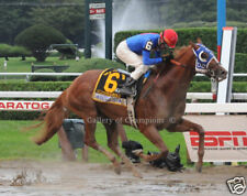 Summer Bird 2009 Travers Stakes 8x10 Photo
