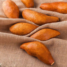 20 Pcs Yellow Sweet Potatoes Seeds Delicious Green Vegetable Garden Plants S094