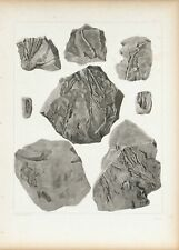 Plants from Red Sandstone of Lake Superior Antique Fossil Print 1852 A