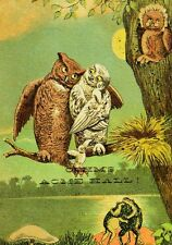 1870's-80's Lovely Anthropomorphic Owl Family Babies, Oehm's Acme Hall Card F88
