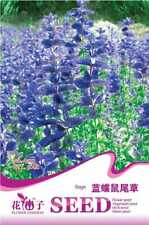 Original Package 50 Blue Butterfly Sage Seeds Salvia Japonica Flowers A157