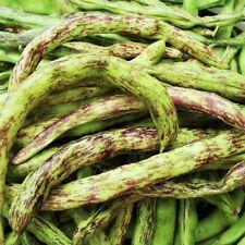 New listing Rattlesnake Bean Seeds, Pole   Vining Purple Green Dragon Runner Beans Seed 2022