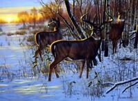"Cynthie Fisher ""Sunrise Retreat"" Deer Buck Art Print  21"" x 16"""