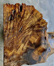 "Small Buckeye Burl wood slab 2.25"" x 10"" x 12"" Thermally treated Roasted"