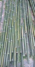 Bamboo poles 6 foot long. Six 6' bamboo poles bamboo stakes