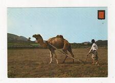 Lanzarote Labores Del Camp Spain Postcard 723a