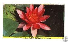 FIGURINA  CARTONATA BRODO STAR SERIE FLORA D'ITALIA NR  11  NINFEA