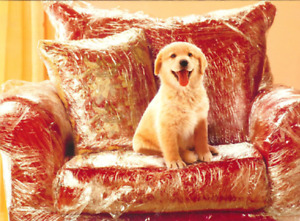 """Happiness is a New Puppy - Congratulations!"" AVANTI CARD Golden Retriever Dog"
