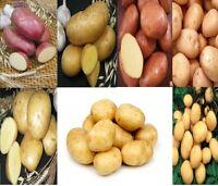 Set Potato seeds Vegetable seeds from Ukraine