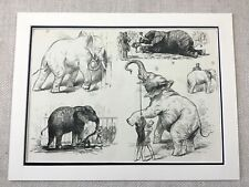 1882 Circus Elephants Jumbo the Elephant Original Antique Victorian Print