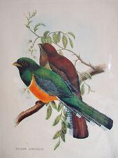 TROGON ATRICOLLIS BY J. GOULD Hand Colored Engraving Arti Grafiche Ricordi