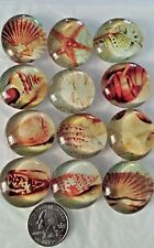 LOT of 12 BEACH SEA LIFE SEASHELL Glass Magnet Refrigerator Office Bubble Magnet