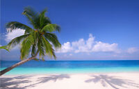 Beach Palm Tree Photo Wallpaper Mural Giant Wall Decor Pre-pasted BZ244