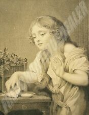 GRAVURE XIXè GREUZE L'Oiseau mort gravé par MORSE les chefs-d'oeuvre de l'art