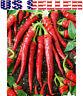 30+ ORGANICALLY GROWN Cayenne Long Slim Pepper Seeds Chili Hot Heirloom NON-GMO