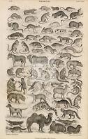 ANTIQUE 1868 Engraving Print of Mammalia - Monkeys, Camel, Bats, Rabbit #C865