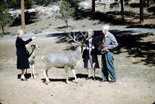 Lot of TWO 1950s Old People feeding Deer 35mm Slide bj71