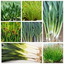 100Pcs Onion Vegetable Seeds Arcus 10 Kinds Home Garden Succulent Lush Plants