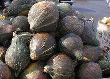 NON GMO Heirloom BLUE HUBBARD Winter Squash 25 SEEDS Sweet 7-12 lbs COMBINE S/H*