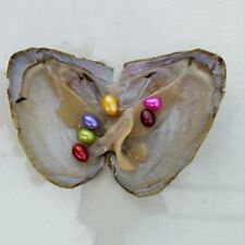 6x Freshwater Oysters With Pearl Mixed Color Pearl 5-10mm Pearl Vacuum Packaging