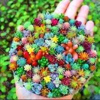 100 Pcs Bag Real Mini Succulent Cactus Seeds Rare Perennial Herb Rare Plants NEW
