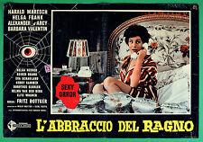 T72 FOTOBUSTA L'ABBRACCIO DEL RAGNO HARALD MARESCH HELGA FRANK FRITZ BOTTGER