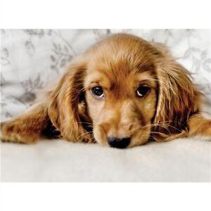 Cocker Spaniel Puppy Dog Greetings Card birthday blank inside