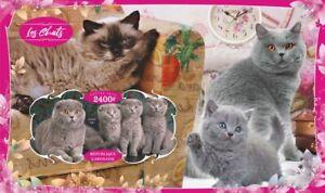 Domestic cats gatos Katzen 2020 s/s MNH #VG2832 IMPERF