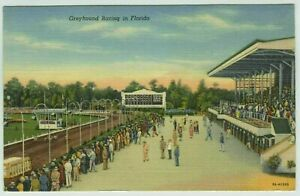 Greyhound Racing in Florida 1939 Linen Postcard