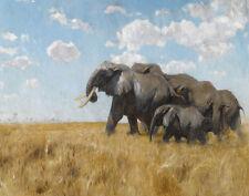 Kuhnert Wilhelm Elephants On The Move Canvas 16 x 20    #5089