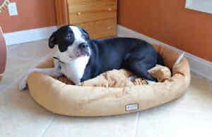 Armarkat Soft Velvet Oval Dog Cat Pet Bed Machine Washable Brown MEDIUM