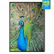 Peacock Tropical Bird Home wall art Blue Green Feather Poster | A5 A4 A3 A2 A1 |