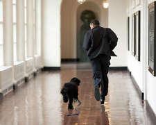 PRES. BARACK OBAMA RUNS WITH FIRST DOG BO 8X10 PHOTO