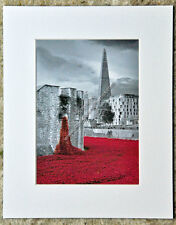 Poppies at The Tower of London mounted photograph picture print by AE Photo