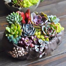 3D Silicone succulent plant fondant chocolate sugarcraft mound DIY clay resin
