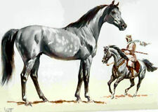 1962 Arabian Horse Print Colored By Sam Savitt - Mint -