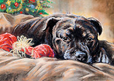 Staffordshire Bull Terrier, Christmas cards pack of 10 by Paul Doyle. C480X