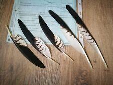 Seltene Greifvogelfedern, mit Herkunftsnachweis...