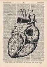 Anatomical Heart 1 Dictionary Art Print, Medical Alternative Anatomy Vintage