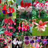 Hardy Bush Fuchsia Flower Seeds Golden Bell Forsythia Home Garden Plants Decor