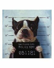Mug Shot Lucia Heffernan Dog Art Print