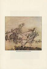 """1975 Vintage PETER PAN """"FAIRIES TIFF WITH BIRDS"""" RACKHAM Color Print Lithograph"""