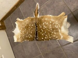 Tanned Axis Full Hides and Backhide For Sale