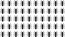 50 Die Cut Ants Decals Window Bumper Sticker Tumbler Kids Decor Bugs Insects