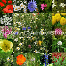 IVISONS 100% WILDFLOWER SEEDS NO GRASS 1KG PURE MEADOW WILD FLOWER MIX 6 UK SEED